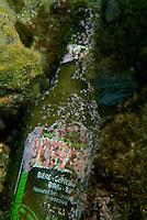 Bottle of beer lying on the ocean floor, Marseille, France.
