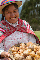 Peru, Urubamba Valley, Quechua Village of Misminay.  Cultural Tourism.  Quechua Woman Displaying Locally Produced Potatoes.