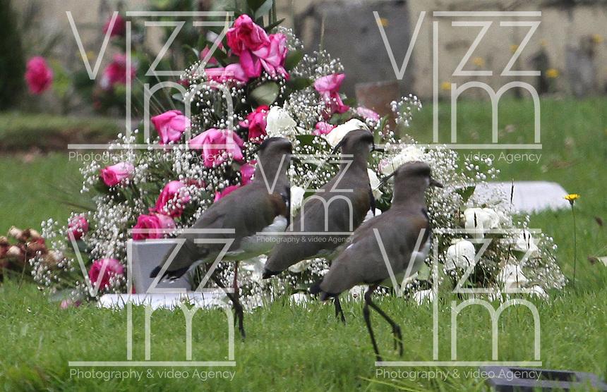BOGOTÁ - COLOMBIA, 02-11-2019:Día de los Difuntos.Cementerios del norte de la ciudad/ <br /> Day of the Dead Photo: VizzorImage / Felipe Caicedo / Satff