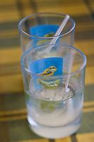 France/DOM/Martinique/Le Vauclin: Service du Ti-Punch dans un bar du village