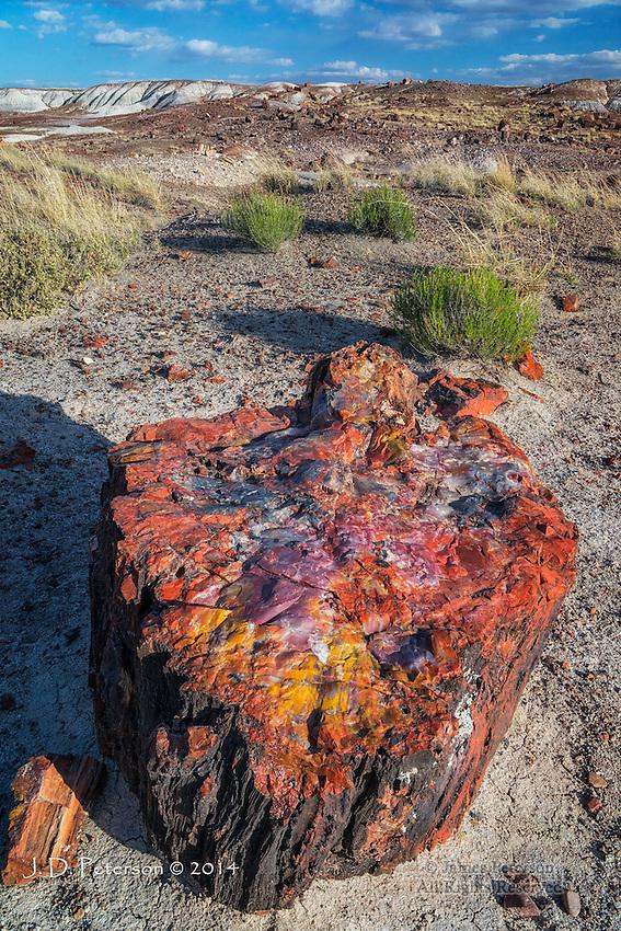 Petrified Log, Petrified Forest National Park, Arizona