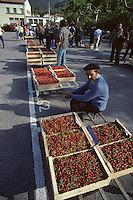 Europe/France/Languedoc-Roussillon/66/Pyrénées -Orientales/Céret : Le marché - Etal de cerises