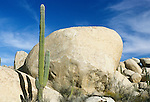 Cardon Cactus at Catvina Rock Garden, Baja California, Mexico