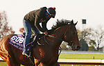 Four Wheel Drive, trained by trainer Wesley A. Ward, exercises in preparation for the Breeders' Cup Turf Sprint at Keeneland Racetrack in Lexington, Kentucky on November 1, 2020. /CSM