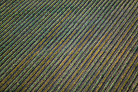 aerial photograph of netting protecting rows of grapes in a vineyard in the Sonoma Valley,  Sonoma County, California