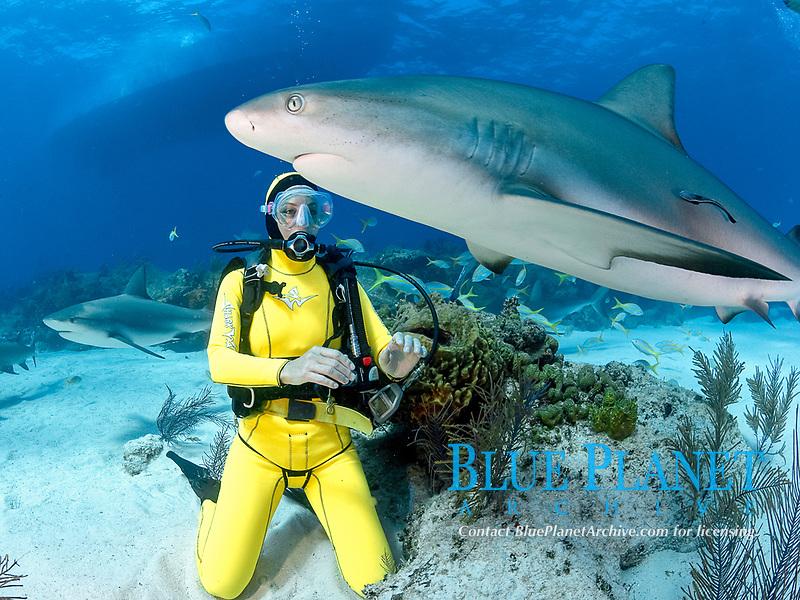 Caribbean Reef Sharks, Carcharhinus pereziii, with female scuba diver, Bahamas, Caribbean, Atlantic