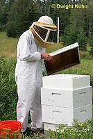 1B15-531z  Person tending honeybee hive