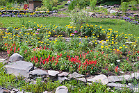 Mostly annuals flower bed with hot colored Salvia and marigolds, with purple coneflower Echinacea and Rudbeckia, ageratum, lawn grass, stone walls in backyard