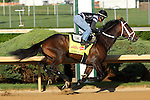 April 23, 2014 General A Rod works 5F in 1:03.40 at Churchill Downs with rider Joel Barrientos.  He is owned by J. Armando Rodriguez and trained by Michael Maker.  He finished third in the Florida Derby.