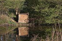 Eisvogel, Brutcontainer aus Lehm mit künstlicher Niströhre am Gewässer, Alcedo atthis, Kingfisher, Martin-pecheur d`Europe