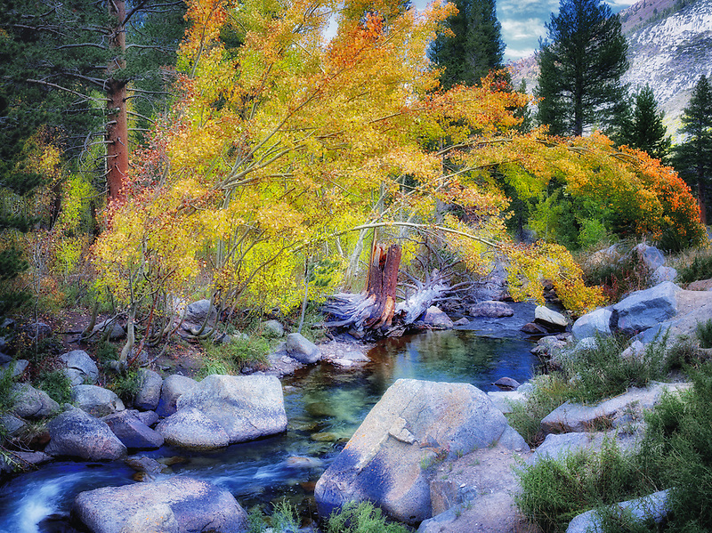 Autumn colored aspen trees along Bishop Creek. Sierra Nevada Mountains, California