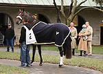 31 October 2009 Lentenor Debut at Keeneland.Lentenor walks in the paddock while trainer, Michael Matz, and owners Roy and Gretchen Jackson look on.