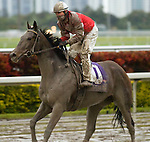 09 January 2010: Malibu Legacy and Jockey Elvis Trujillo after the Old Hat Stakes at Gulfstream Park in Hallandale Beach, FL.