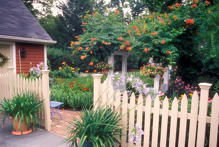 Beautiful entrance into garden, lush easy backyard landscaping with flowers, vine, containers: Campsis 'Madame Galen' Trumpet flower climbing vine, Daylilies, fence, summer flowering bulbs agapanthus, pot containers, Calibrachoa, in lots of hot colors, picket fence, brick walkway, shed, great mixture of perennial and annual plants and flowers