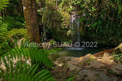 Rio Grande, El Yunque National Forest, Puerto Rico<br /> September 9, 2021<br /> <br /> El Yunque National Forest.
