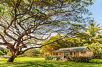 Shaded by a big tree at Waimea Plantation Cottages, Kaua'i