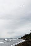 Brown Pelican (Pelecanus occidentalis) pair flying along coast, Tortuguero National Park, Costa Rica