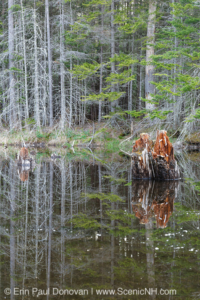 """Wetlands near the old """"Depot Camp"""" location along Livermore Road in Waterville Valley, New Hampshire. Depot Camp was a logging camp used during the Mad River logging era."""