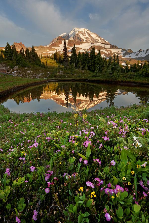 Mount Rainier reflected in small pond in Spray Park meadows, Mount Rainier National Park, Washington State, USA