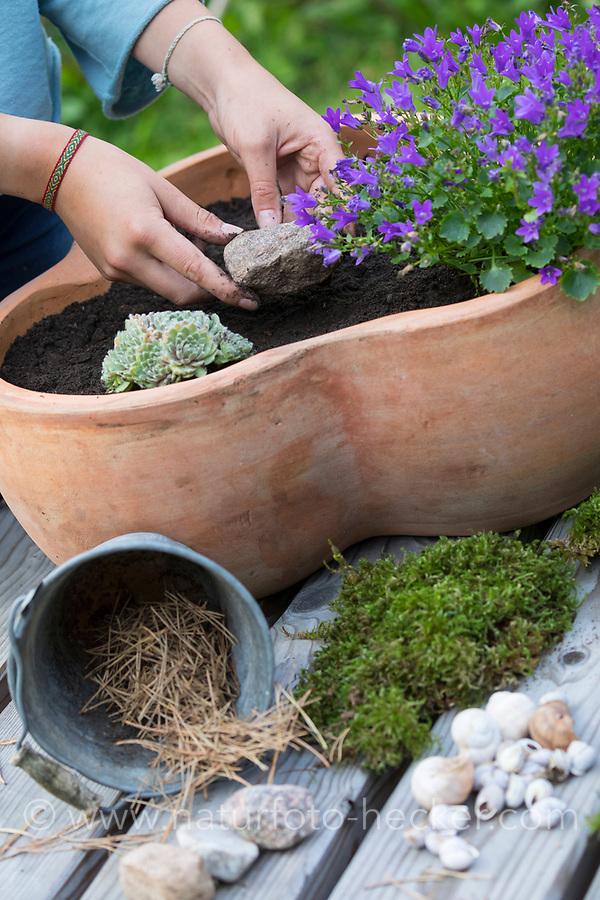Wildbienen-Nisthilfe mit Schneckengehäusen, Schneckengehäuse, Schneckenhaus, Schneckenhäusern, verschieden große, leere Schneckenhäuser werden in eine Schale gelegt. Die Pflanzschale, Blumenschale wird bepflanzt und mit Moos und Steinen dekoriert. Schnirkelschnecken. Wildbienen-Nisthilfen, Wildbienen-Nisthilfe selbermachen, selber machen, Wildbienenhotel, Insektenhotel, Wildbienen-Hotel, Insekten-Hotel