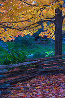 2012-10-04_RED MILL_Fall Colors