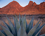 Big Bend National Park, TX<br /> Agave and the Chisos Mountain Range at sunset