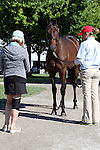 Hip #40 Empire Maker - Ticker Tape filly being shown at the  Keeneland September Yearling Sale.  September 9, 2012.