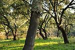 Spain. Huelva. The company Silvasur Agroforestry SA, ENCE Group, is engaged in intensive plantation of eucalyptus in the protected landscape of Rio Tinto. A controversial activity and not very well regarded by the environmental groups who accuse Ence of habitat destruction and elimination of native species. on february 2011 (c) Pedro ARMESTRE<br /> Spain. Huelva. La empresa Silvasur Agroforestal S.A., del Grupo ENCE, se dedica a la plantación intensiva de eucalipto, en el Paisaje Protegido del Río Tinto. Una actividad polemica y no muy bien vista por los sectores ecologistas que culpan a Ence de la destruccion de habitats y eliminación de especies autoctonas. 10 febrero 2011(c)Pedro ARMESTRE