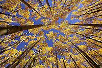 Under a blanket of Gold - Arizona