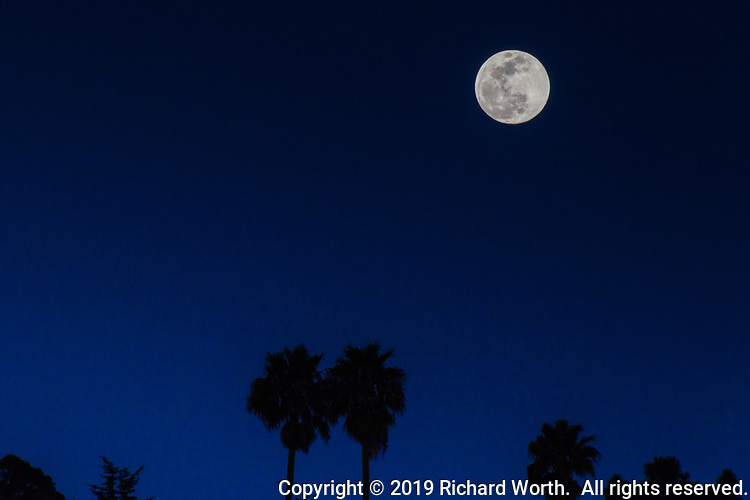 The Full Snow Moon over palm trees in a Hayward, California, neighborhood shortly after rising and about 14 hours shy of official full moon status.