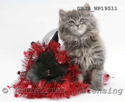 Kim, CHRISTMAS ANIMALS, photos, GBJBWP19511,#XA# stickers