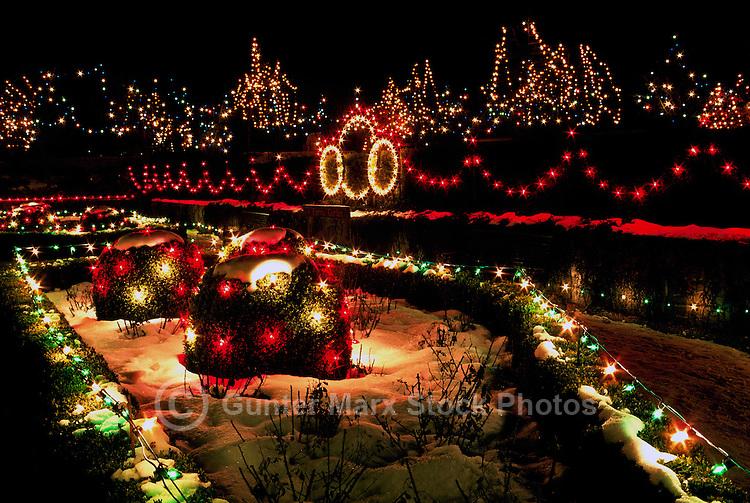 Vancouver, BC, British Columbia, Canada - Christmas Lights on Trees at VanDusen Botanical Garden