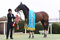 Horse Racing: Silk Road Stakes at Kyoto Racecourse