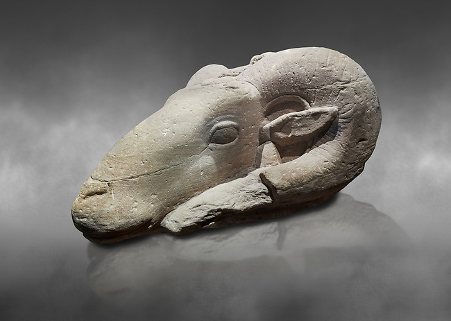 Ancient Egyptian sculpture of the head of a criosphinx, sandstone, New Kigdom, 18th Dynasty, (1390-1353 BC), Karnak, Temple of Khonsu. Egyptian Museum, Turin. Grey background,<br /> <br /> From the New kingdom onwards a particular image of the god Amon was adopted, the criosphinx, which was a sphinx whose human head was replaced by the head of a ram, the animal form of Amon. A large number of criosphinx are still standing in Karnak today. Drovetti collection. C 846.