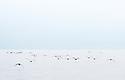 Flying seabirds in the open ocean