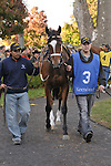 24 October 2009: Satans Quick Chick in the paddock before the Grade 2 Lexus Raven Run Stakes at Keeneland Race Course, Lexington, Kentucky.