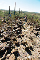 John Madsen, associate curator for the Arizona State Museum (621-4795) took us to a historic site to show how a bulldozer from the La Oso Ranch earthmoving went off course and crossed onto BLM land and cut across a historical archaeological site...this is a rock alignment from a possible prehistoric componet to a damaged historical site...