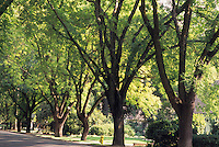 Residential street with mature shade trees