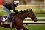 November 1, 2020: Horologist, trained by trainer William I. Mott, exercises in preparation for the Breeders' Cup Distaff at Keeneland Racetrack in Lexington, Kentucky on November 1, 2020. Carolyn Simancik/Eclipse Sportswire/Breeders Cup