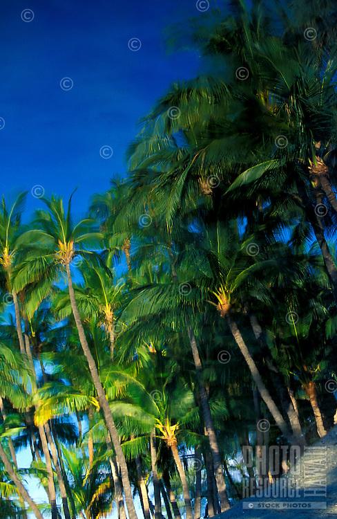 Palm trees with beautiful blue sky