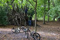 GERMANY, Hamburg, forest / Deutschland, Hamburg, Wald im Jenisch Park, Waldhöhle