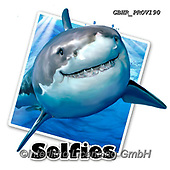 Howard, SELFIES, paintings+++++,GBHRPROV190,#Selfies#, EVERYDAY ,sharks,maritime
