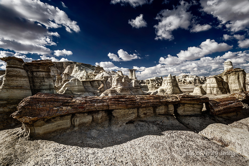 An almost complete petrified tree near Alamo Wash in the Bisti Wilderness in the San Juan Basin of northwest New Mexico.