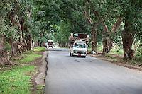 Zanzibar, Tanzania.  Country Road near Bi Khole Ruins.
