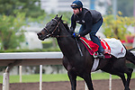 DEC 12,2015: Free Port Lux ,trained by Freddy Head,exercises in preparation for the Hong Kong Cup at Sha Tin in New Territories,Hong Kong. Kazushi Ishida/ESW/CSM