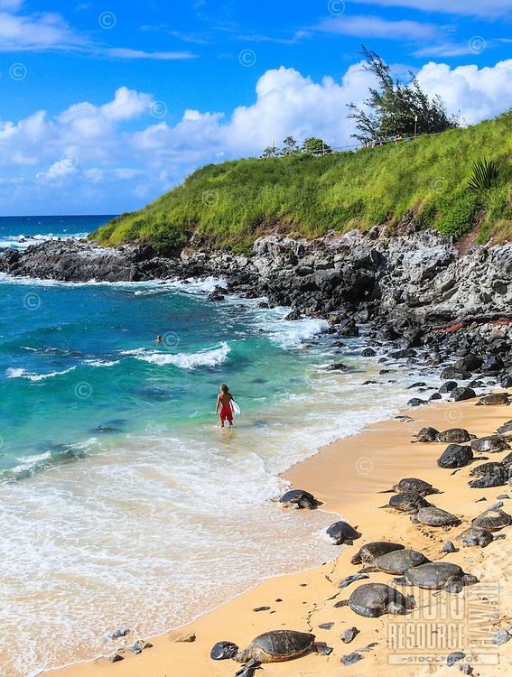 Hawaiian green sea turtles rest while people enjoy the sea at Ho'okipa Beach, Maui.