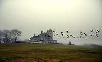 Birds fly over the Inn at Castle Hill