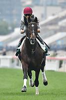 7 December 2017, Hong Kong - Joao Moreira on Tosen Basil during track work prior to the Longines Hong Kong International Races at Sha Tin Racecourse in Hong Kong. Photo Sydney Low