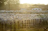 TANZANIA Tanga, Sisal industry, Amboni Sisal Estate, drying of sisal fibres / TANSANIA Tanga, Sisal Industrie, Amboni Estate, Trocknen der Sisal Fasern