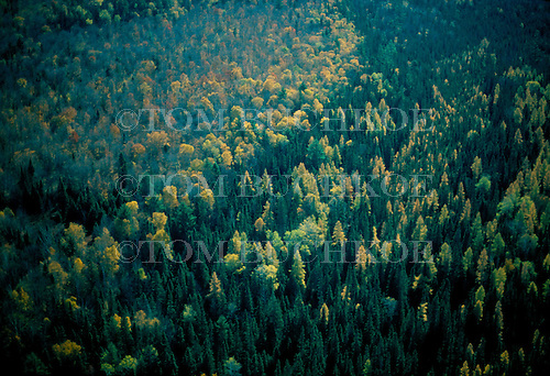 Aerial photo of a northwoods forest in the Upper Peninsula of Michigan in the fall.
